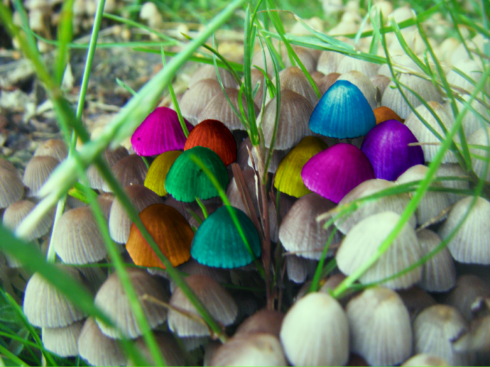 magic_mushrooms_by_falsereflex